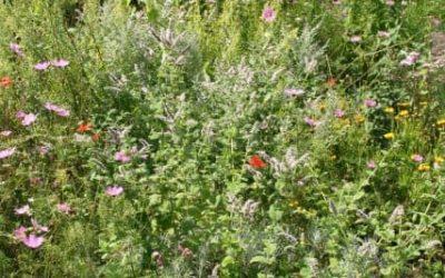 Naturgartenwettbewerb: Aktiv für Artenvielfalt und gegen Insektensterben